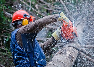 Tree Surgeon using a chain Saw