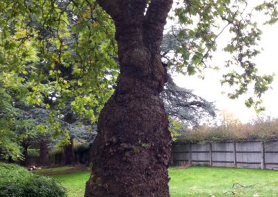 Tree-Surgery-1