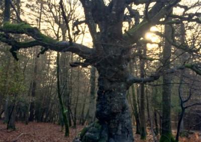 Tree-Surgery-1 copy