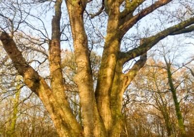 Tree-Surgery-106