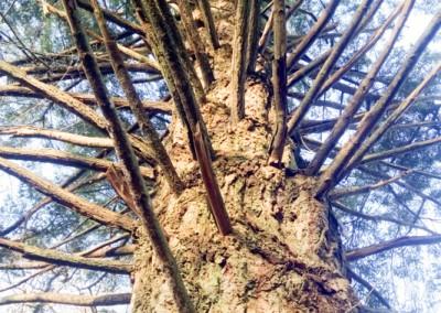Tree-Surgery-107
