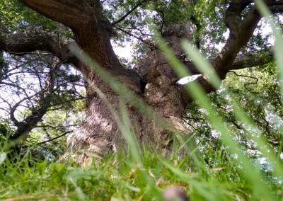 Tree-Surgery-12