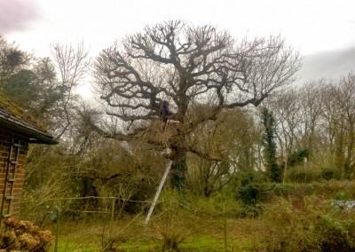 Tree-Surgery-122