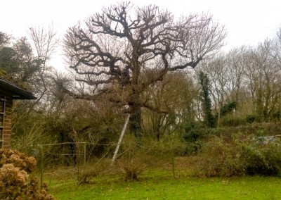 Tree-Surgery-123