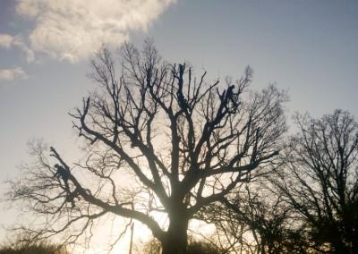 Tree-Surgery-129