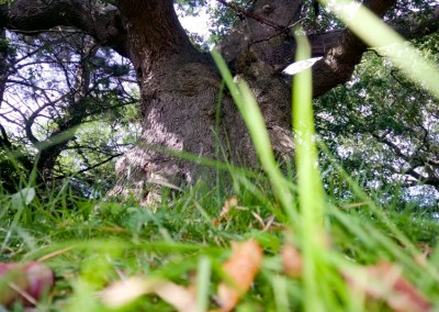 Tree-Surgery-13
