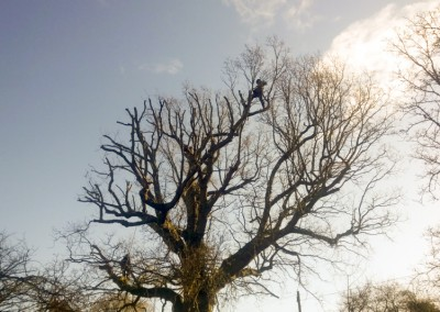 Tree-Surgery- Crowborough