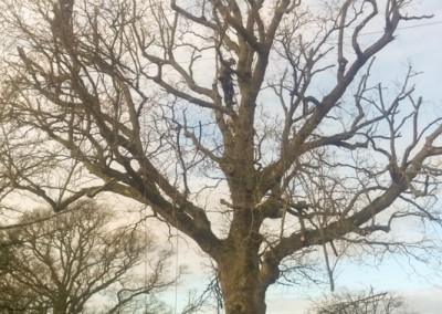 Tree-Surgery-132