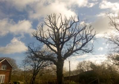 Tree Surgeon Crowborough