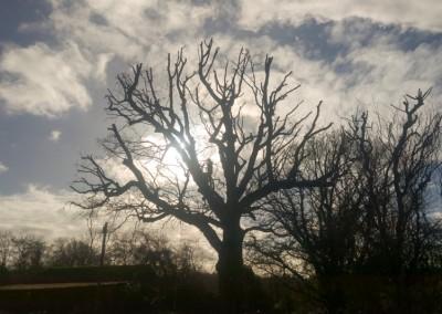 Tree-Surgery-134
