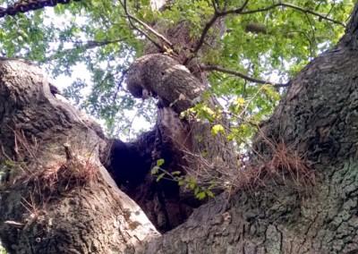 Tree-Surgery-15