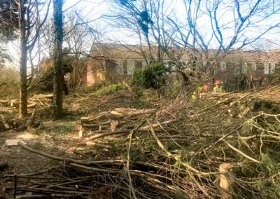 Tree-Surgery-152