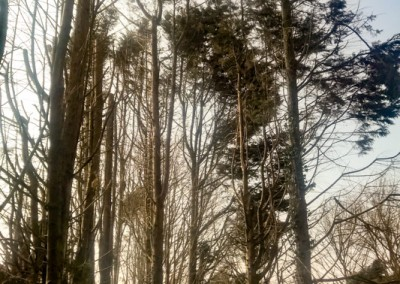 Tree-Surgery-154