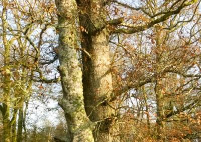 Tree-Surgery-16