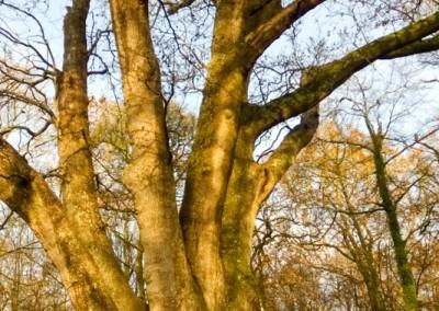 Tree-Surgery-17