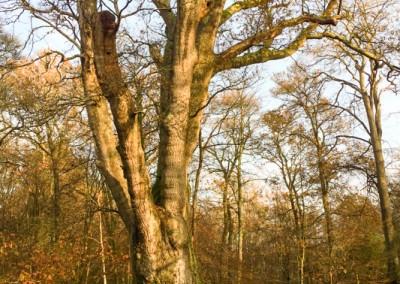Tree-Surgery-18