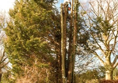 Tree-Surgery-19