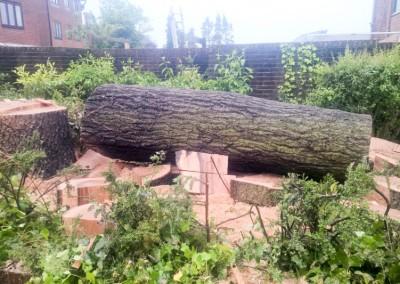 Tree-Surgery-197