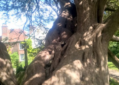 Tree-Surgery-198