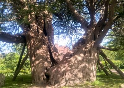 Tree-Surgery-199