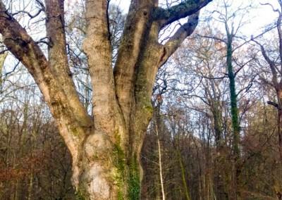 Tree-Surgery-20