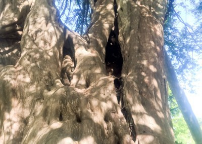 Tree-Surgery-200