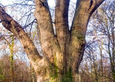 Tree-Surgery-21