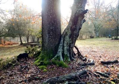 Tree-Surgery-22