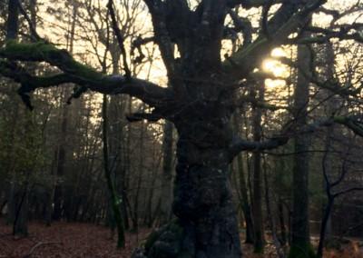 Tree-Surgery-23