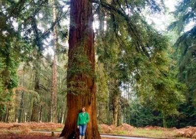 Tree-Surgery-26