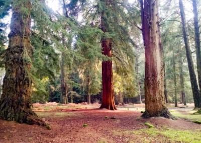 Tree-Surgery-27