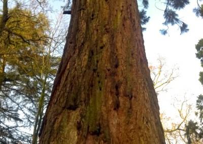 Tree-Surgery-31