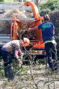 Tree Surgery Hailsham