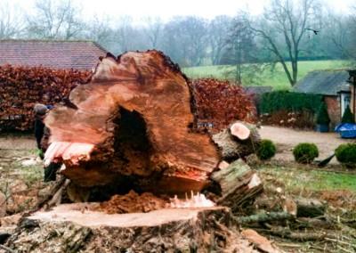 Tree-Surgery-4
