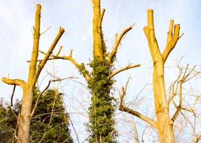 Tree-Surgery-44 copy