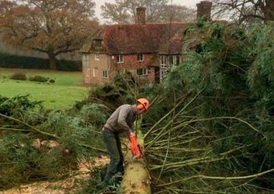 Tree Surgery Uckfield
