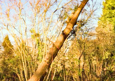 Tree-Surgery-50