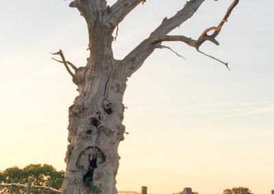 Tree-Surgery-55