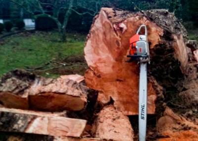 Tree-Surgery-6