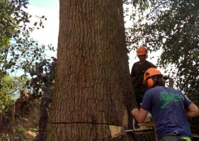 Tree-Surgery-62