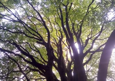 Tree-Surgery-63