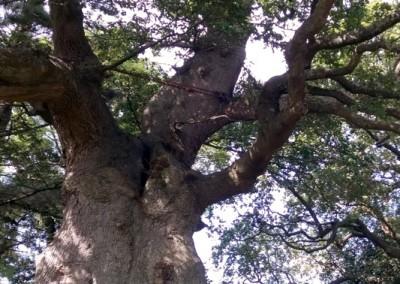 Tree-Surgery-65