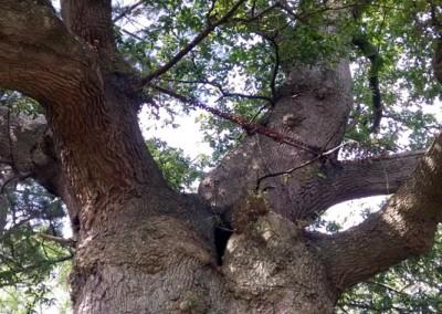 Tree-Surgery-66