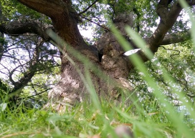 Tree-Surgery-67