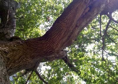 Tree-Surgery-68