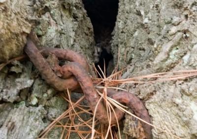 Tree-Surgery-69