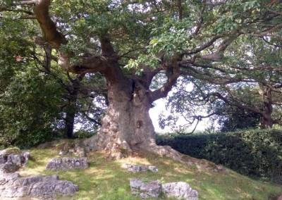 Tree-Surgery-70