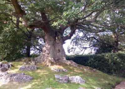 Tree-Surgery-71