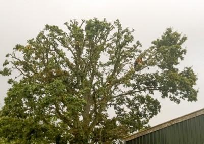 Tree-Surgery-85