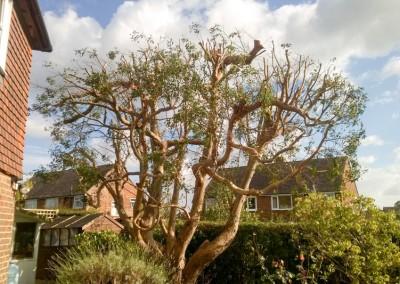 Tree-Surgery-93